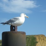 seagull-perch