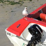 Seagull-Screeching-On-Boat
