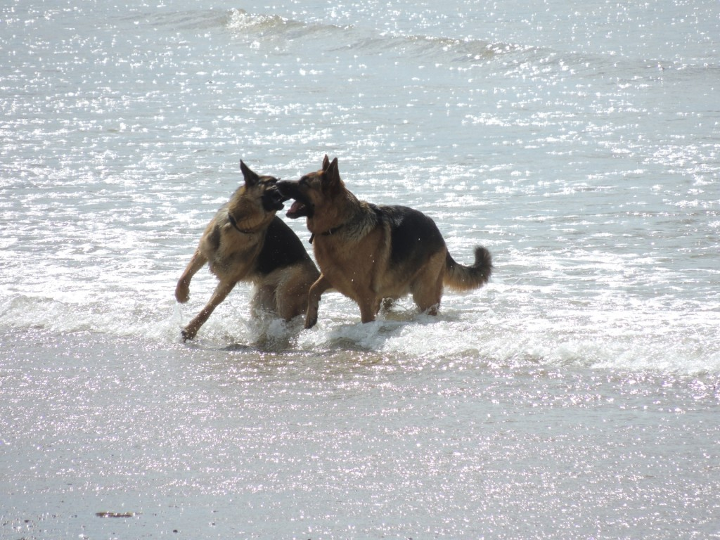 Abbotsbury Beach Dogs