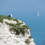 Old Harry Rocks Seagull